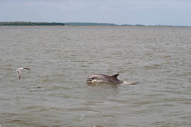 Tybee dolphin cruise