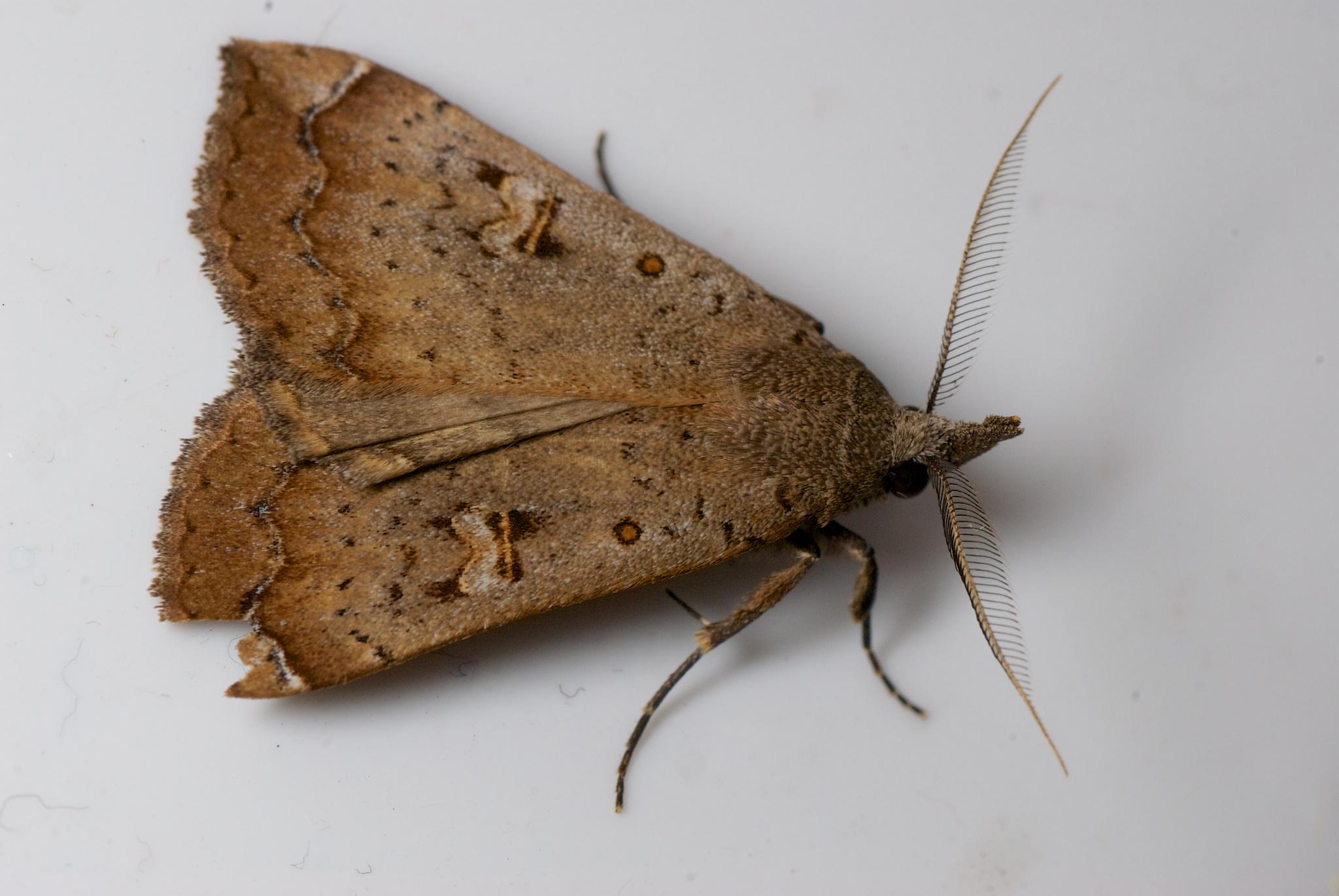 Moth in the bathroom explore mollivan jon39s photos on for Tiny moths in bathroom