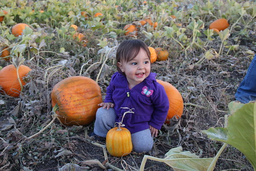 Jovie baby girl in the pumpkins 5