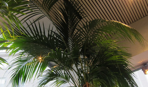 Kukkakaupan palmu by Anna Amnell