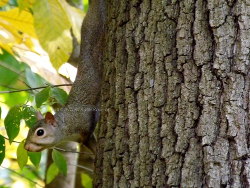 Squirrel Close up by countrylife4me1