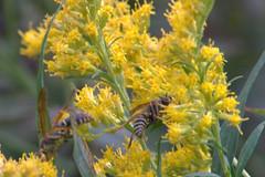Last pollination