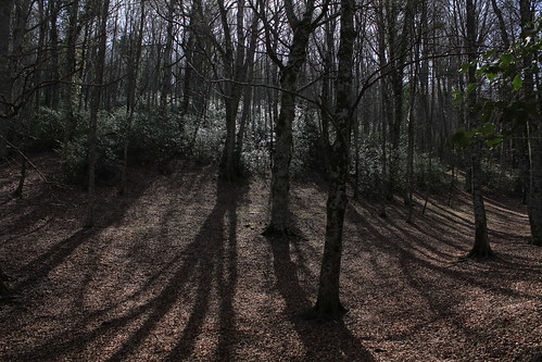 La foresta umbra