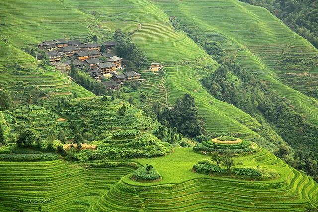 Longji rice terraces in Longsheng, China.