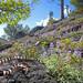 California Mountain Kingsnake (Lampropeltis zonata) by David A Jahn