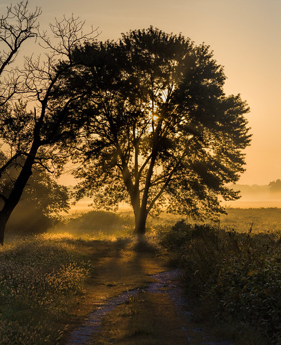 2016 canon eost5 illinois midwest september sun clouds field fog sky sunrise tree trees unitedstates us