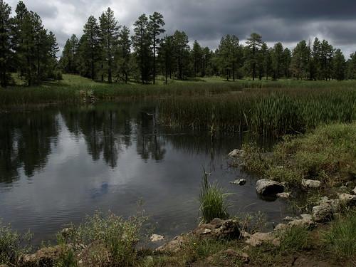 bigspringsenvironmentalstudyarea bigsprings pinetoplakeside pinetop pinetoparizona whitemountains springs wetlands meadows arizona geo:lat=34137449359433646 geo:lon=10996835254232786 geotagged riparian riparianzone riparianarea riparianhabitat