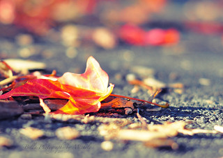 the first red leaf~