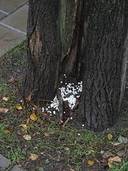 Внутренний жемчуг осенних деревьев