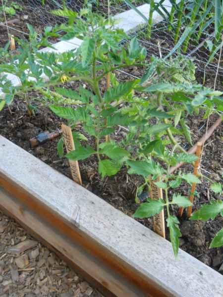 Community Garden Revelstoke Canada v 8
