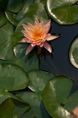 2012-02-29 3294a  Thailand
