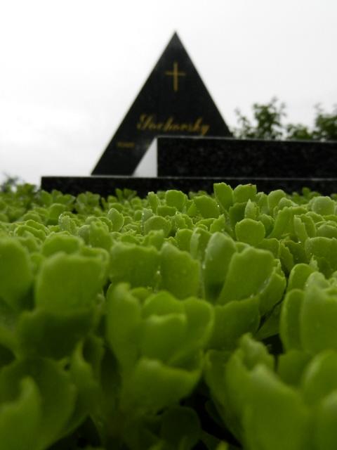 Friedhof_Kahlenbergerdorf_2012_1