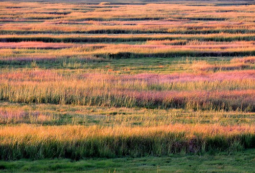 Cheesequake marsh in the setting sun