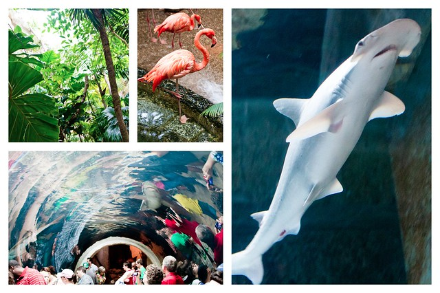 Dallas World Aquarium Collage 1