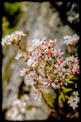 Flowers XCI - Photo of Audeloncourt