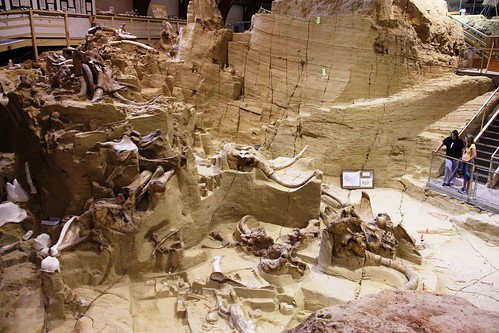 iceage southdakota mammal fossil paleontology mammoth bones bone prehistoric mammals dig fossils tusks hotsprings tusk mammothsite mammoths hotspringssouthdakota digsite paleontological