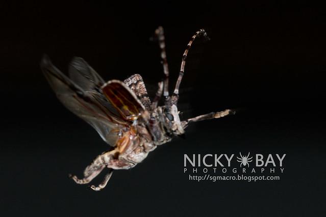 Longhorn Beetle (Cerambycidae) - DSC_5517