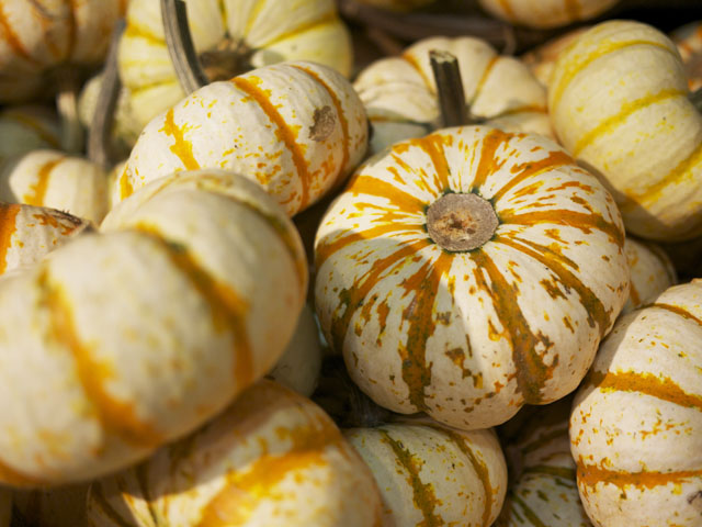 mini pumpkins from whole foods