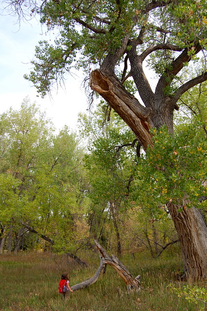 Owl Nest - Walking at Sawhill Ponds - Boulder, CO