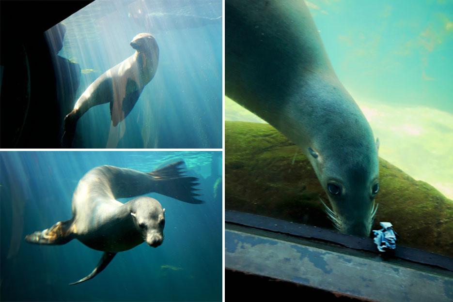 093012_aquarium12