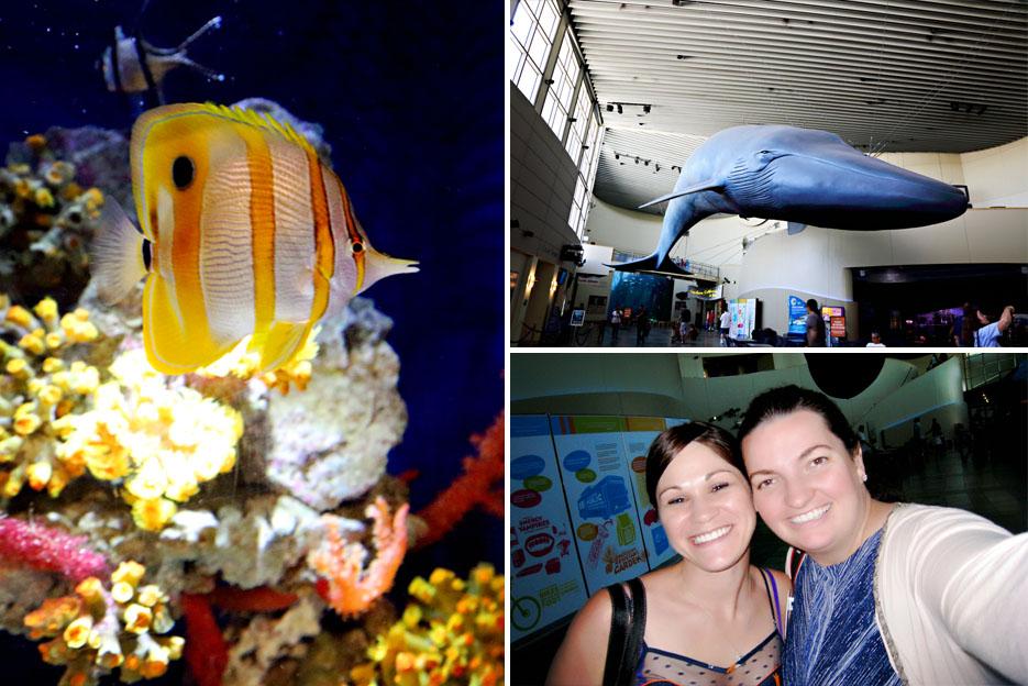 093012_aquarium15