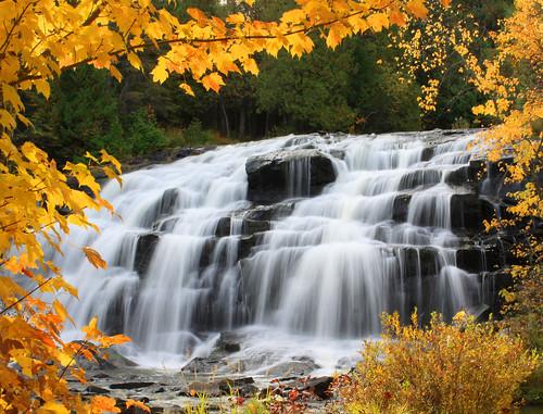 Autumn's Mellow Yellow at Bond Falls