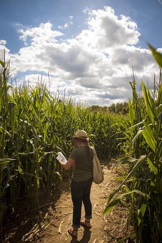 Corn Maze!