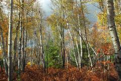 Marion Brooks Natural Area (6)
