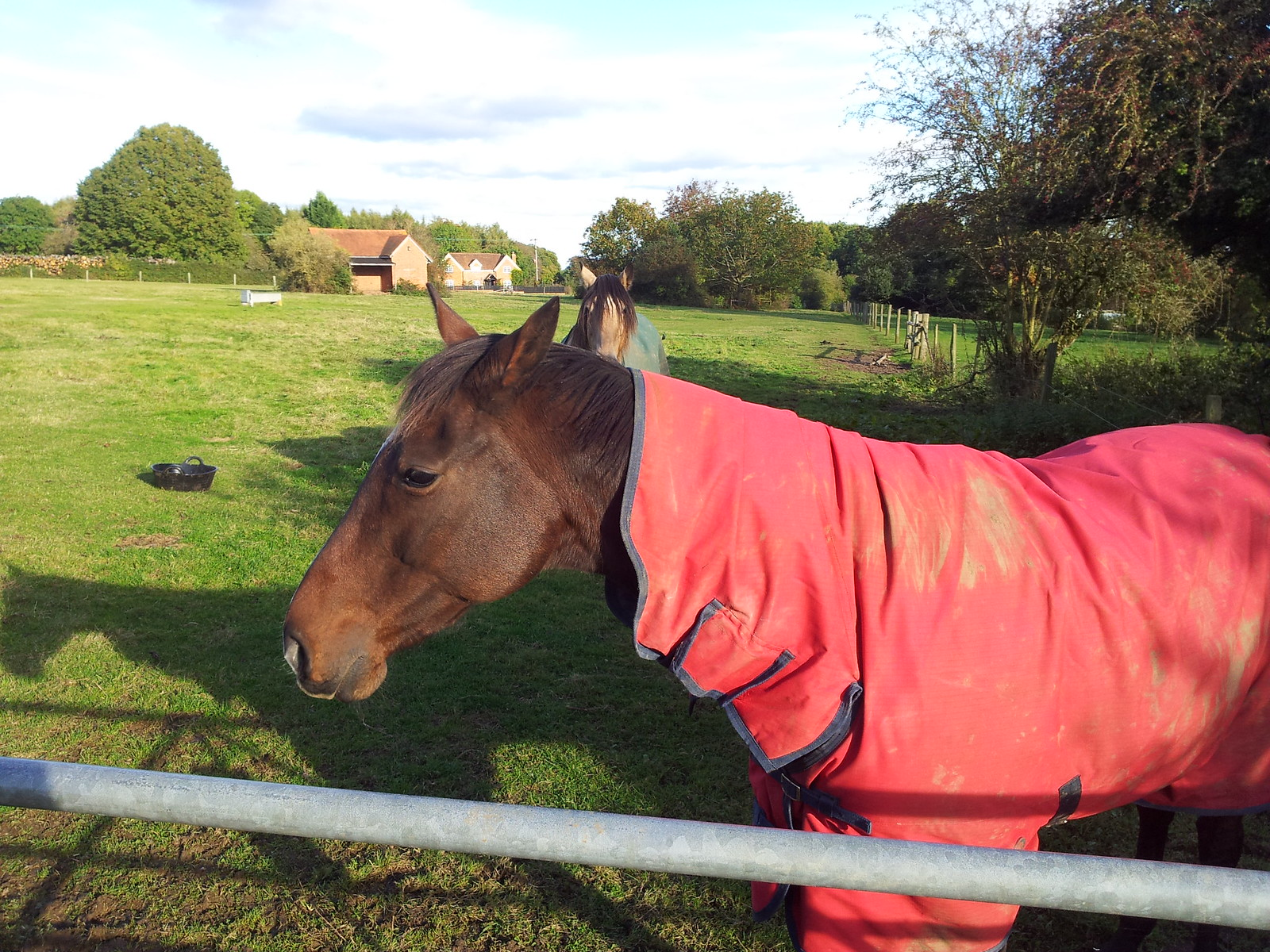 Horse Henley to Pangbourne
