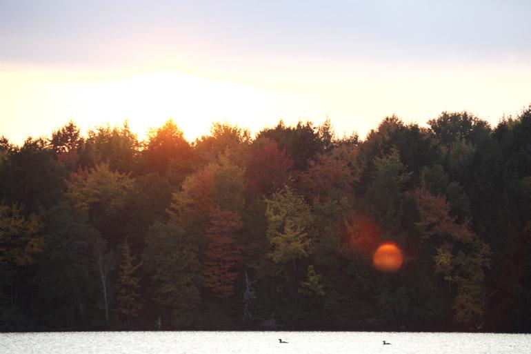 web_solarflare_foliage_0069