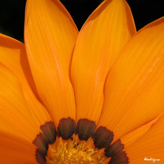 Sunny Flower - Fleur ensoleillée
