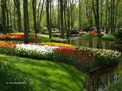 Dutch Tulips, Keukenhof Gardens, Holland - 0656 POTD