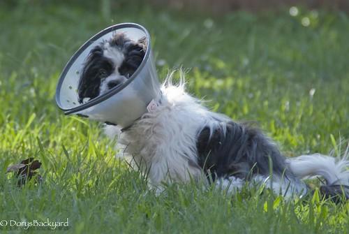 DogBlogWE101512-14