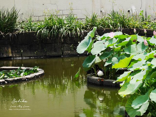 台北一日遊景點推薦植物園荷花蓮花池 (29)