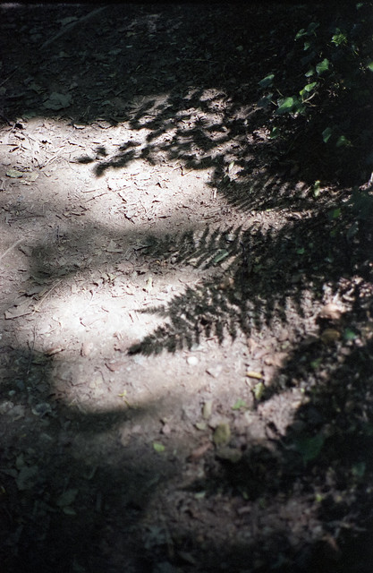 Fern shadows on a path
