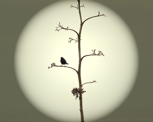 Lonely bird