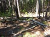 Dans les sous-bois au départ de Naseu : résultat des tempêtes d'hiver