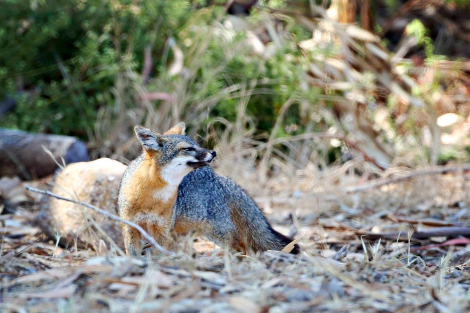 081812_07_fox03