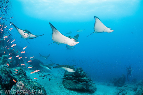 EAGLE RAYS COMING THROUGH