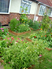 front garden potager