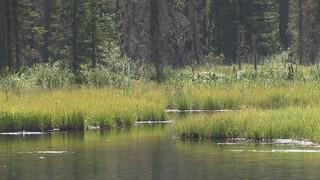 Life at Sibbald Meadows Pond