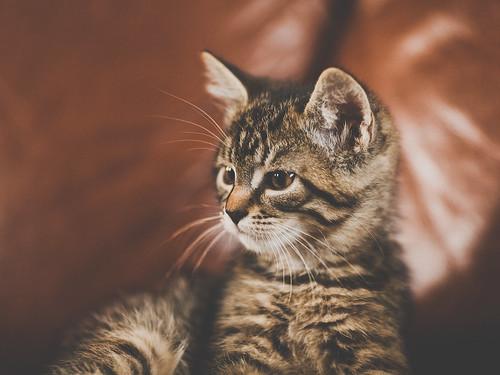 無料写真素材, 動物 , 猫・ネコ, 子猫・小猫