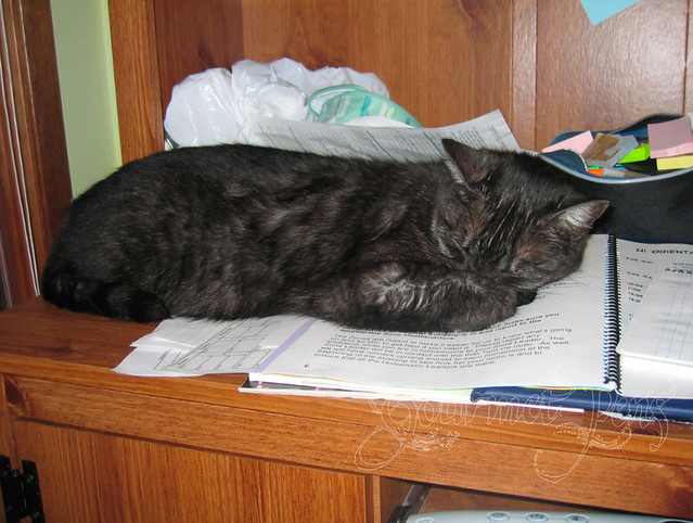Asleep on my work
