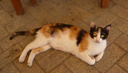 Ateenalainen kissa by Anna Amnell