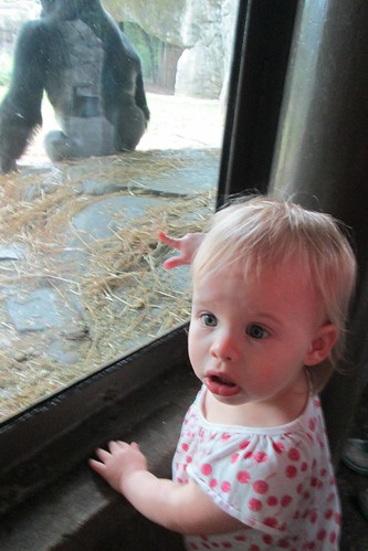 Lucy's face after seeing a gorilla up close for the first time. Priceless.