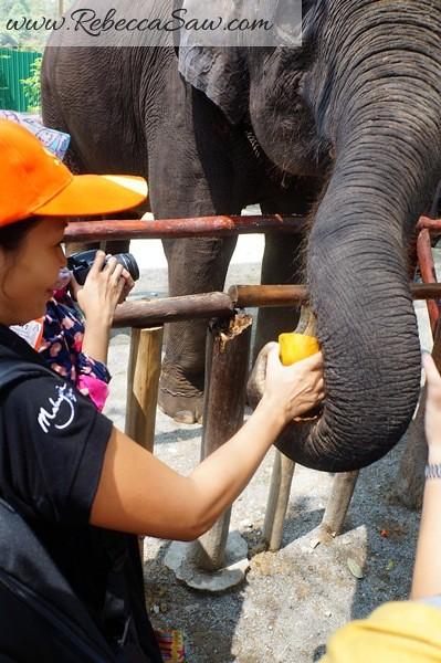 Malaysia Tourism Hunt 2012 - National Elephant Conservation Centre -001