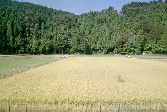刈り入れ時 / Harvest Time