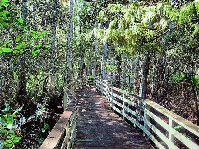Corkscrew Swamp boardwalk HDR 20120930