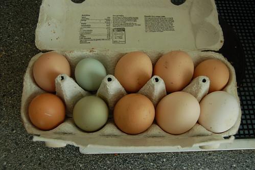 eggs August 2012