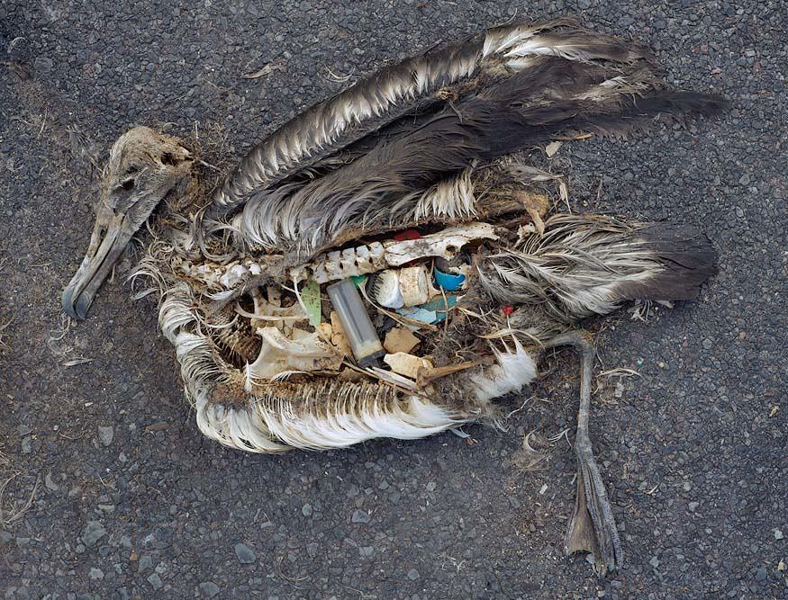 一隻鳥的剖面圖裡面充滿塑膠垃圾